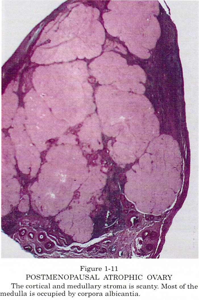 Pathology Outlines Normal Histology