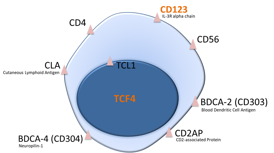Markers expressed by pDCs