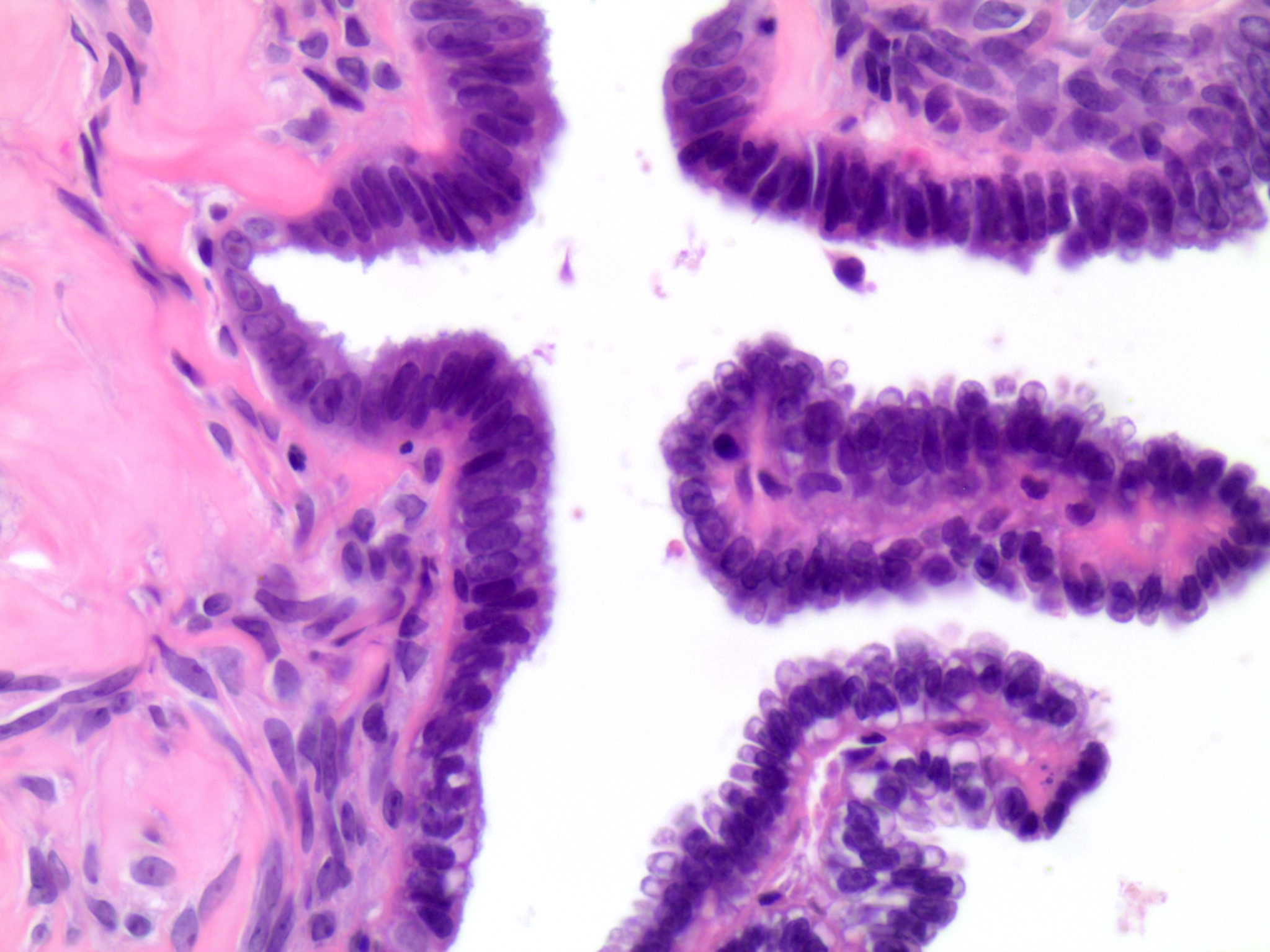 Cytologic features