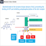 Alectinib binds to tyrosine kinase