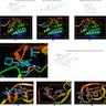 Alectinib interacts with ALK P loop